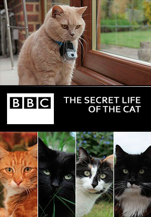the secret life of the cat afisha